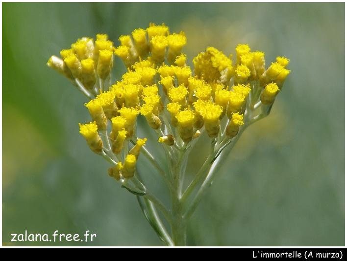 A murza : l'immortelle